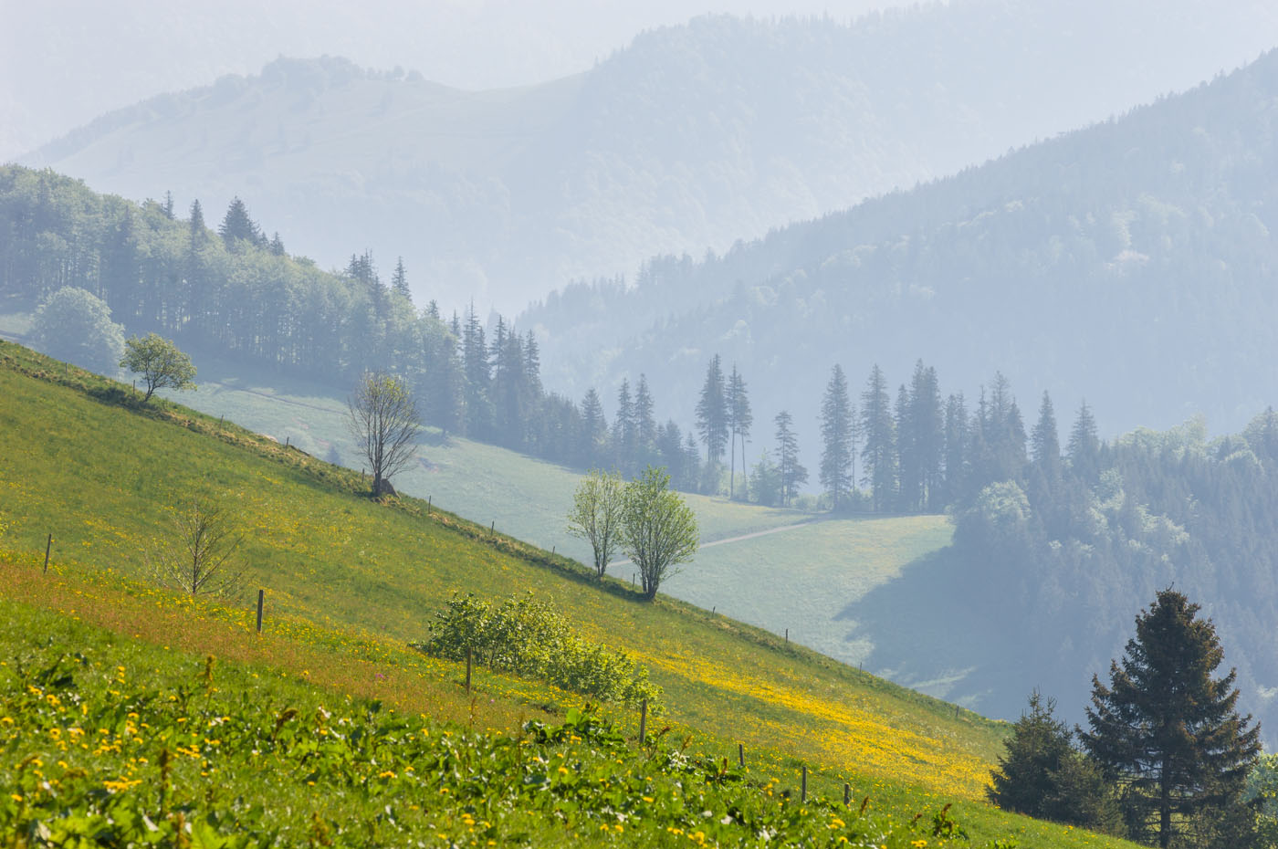 Black Forest | Spring day | Schauinsland